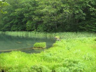 蔦温泉周辺にある蔦沼